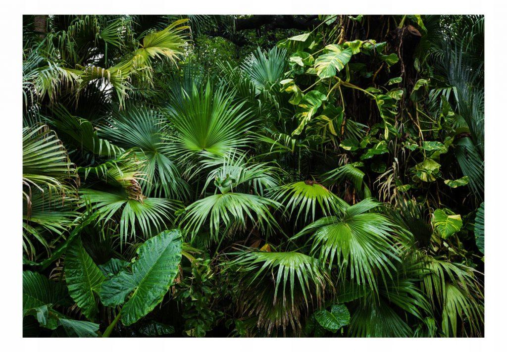 Fototapetas džiunglės palmės ir monsteros